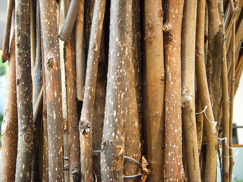 1-Branch-texture