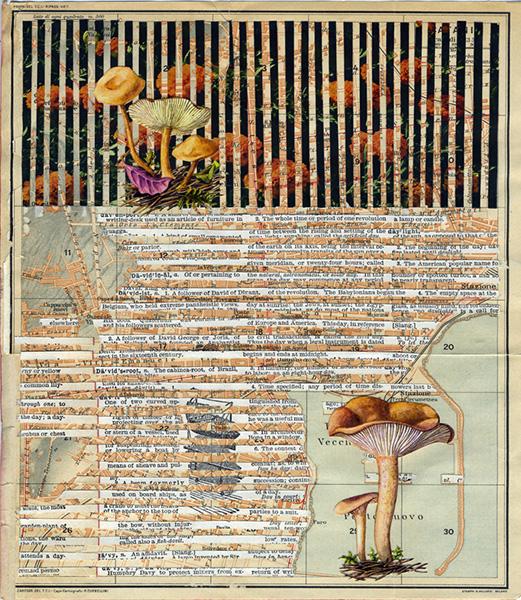 Mushroom027