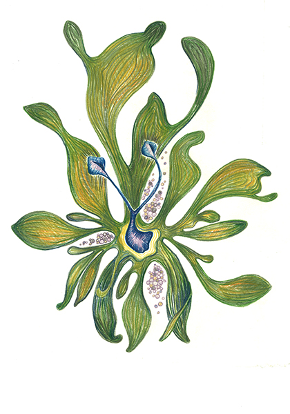 Antennea-Plant