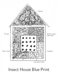 insect Home Drawing