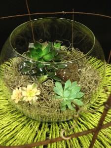 Chartreuse Succulent
